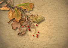 Vintage textured background with faded autumn leaves Stock Photos