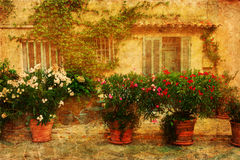 Vintage textured picture of a Provencal idyll. With oleander plants in front of an old house Stock Photography