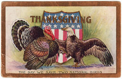 1909 Vintage Thanksgiving Postcard Two National Birds. Thanksgiving postcard dated 1909 showing the American Turkey and Bald Eagle shaking feet.  The United Royalty Free Stock Image