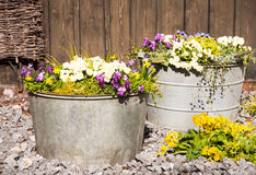 Vintage tin buckets filled with spring flowers Stock Photos