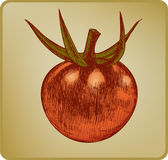 Vintage tomato, hand drawing. Vector illustration. Stock Photo
