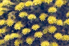 Vintage tone flower background Royalty Free Stock Photo