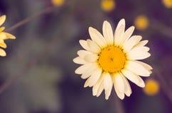 Vintage tone flower background Royalty Free Stock Images