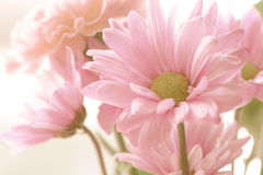 Vintage Tone Flowers Royalty Free Stock Photography