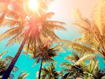 Vintage tone style coconut tree on the beach.  royalty free stock photo