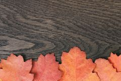 Vintage toned autumn oak leaves for background Royalty Free Stock Photography