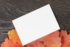 Vintage toned autumn oak leaves for background Stock Photos