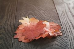 Vintage toned autumn oak leaves for background Stock Photography