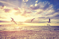 Vintage toned beach with flying birds at sunset.  Royalty Free Stock Photo