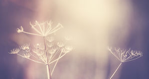 Vintage toned dry plant, shallow depth of field. Stock Photo