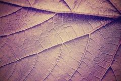 Vintage toned leaf close up. Royalty Free Stock Images