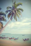 Vintage toned palm trees on a beach. Stock Images