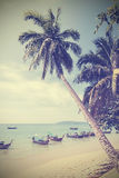 Vintage toned palm trees on a beach. Royalty Free Stock Photos