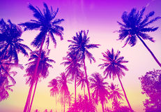 Vintage toned palm trees silhouettes at sunset Royalty Free Stock Photography