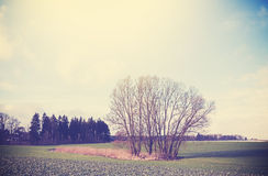 Vintage toned peaceful rural landscape. Royalty Free Stock Photography