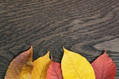 Vintage toned photo of autumn leaves over wood Royalty Free Stock Photos
