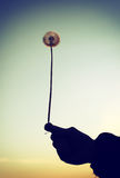 Dandelion in a Hand Vintage Photo Royalty Free Stock Photo