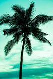 Vintage toned picture of palm silhouette under sky. Palm tree on tropical beach, vintage toned and retro color stylized Stock Photography