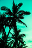 Vintage toned picture of palm silhouette under sky. Palm trees on tropical beach, vintage toned and retro color stylized Royalty Free Stock Photo