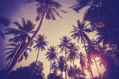Vintage toned picture of palms silhouettes against sunrise Stock Photography