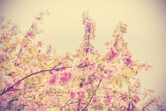 Vintage toned picture of tree in blossom. Royalty Free Stock Photos