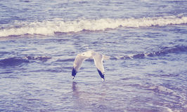 Vintage toned seagull flying over the sea. Stock Photography