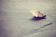 Vintage toned shell on stone background. Royalty Free Stock Images