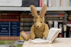 Vintage toy rabbit reading with book background. Stock Images