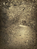 Vintage Trail Photograph Stock Photos