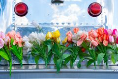Vintage travel trailer camper with aluminum siding and a tail gate bumper covered in tulip flowers, depicting the hippie era or a. Fun lifestyle royalty free stock images