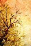 Vintage tree Royalty Free Stock Image