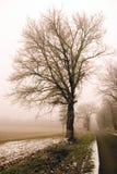 Vintage tree Royalty Free Stock Photos