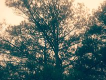 Vintage tree Royalty Free Stock Photography