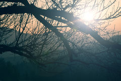 Vintage tree crown branches background Royalty Free Stock Photography