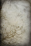 Vintage Tree Imprint Background Stock Images
