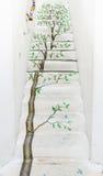 Vintage tree painting stair Royalty Free Stock Image
