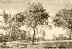 Vintage Trees. Vintage photo based painterly trees scene in sepia tones tapestry Royalty Free Stock Photo