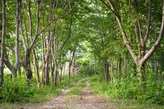 Vintage trees alley,path way in forest. Stock Photos