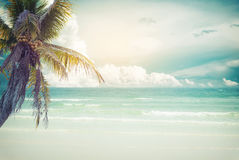 Vintage tropical beach seascape with palm tree in summer Stock Photography
