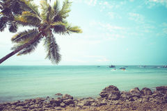 Vintage tropical beach seascape with palm tree in summer. Stock Image