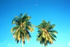 Vintage Tropical Island Paradise Royalty Free Stock Photography