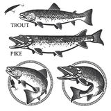 Vintage trout fishing emblems, labels and design. Set of vector fishing emblem with trout and pike Stock Photo