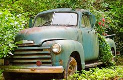 Vintage Truck/Flower Planter. This wonderful old truck is being used as a planter, roses are blooming in the bed stock photo