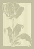 Vintage tulip. Vector template frame design for greeting card Stock Photos