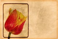 Vintage tulip. Old postcard with a flower. Flower decoration on vintage paper stock photo