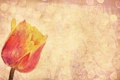 Vintage tulip Stock Image