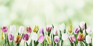 Vintage Tulip Flowers Stock Photo