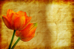 Vintage Tulips. Photo art image of two beautiful tulips close up and background with copy space in vintage grunge style