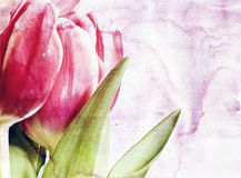 Vintage Tulips Stock Photos