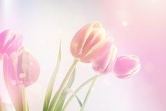 Vintage tulips background Stock Image